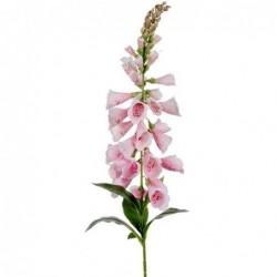 Digitale - Mr Plant - Rose pale - 90 cm
