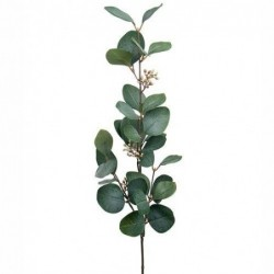 Eucalyptus fleuri - Mr Plant - 70 cm
