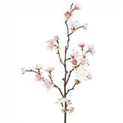 Cerisier - Mr Plant - Rose pale - 60 cm