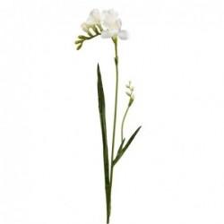 Freesia - Mr Plant - Blanc - 60 cm