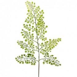 Adiantum - Mr Plant - 60 cm