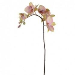 Orchidée - Mr Plant - Rose - 60 cm