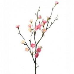 Prunier - Mr Plant - Rose - 50 cm