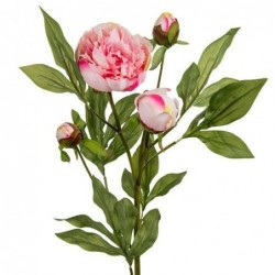 Pivoine - Mr Plant - Rose - 40 cm