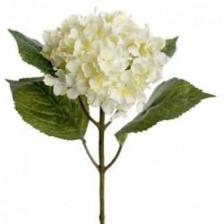 Hortensia - Mr Plant - Blanc - 40 cm