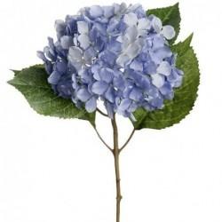 Hortensia - Mr Plant - Bleu - 40 cm