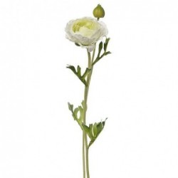 Renoncule - Mr Plant - Blanc - 36 cm