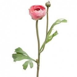 Renoncule - Mr Plant - Rose - 34 cm