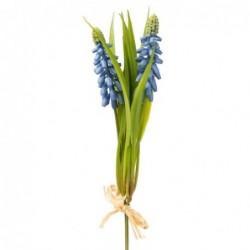 Muscari - Mr Plant - Bleu - 20 cm