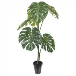 Monstera - Mr plant - 120 cm