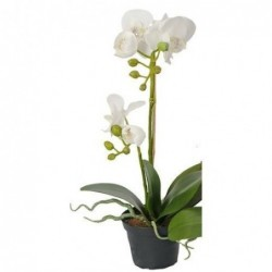 Orchidée phalaenopsis - Mr plant - Blanc - 45 cm