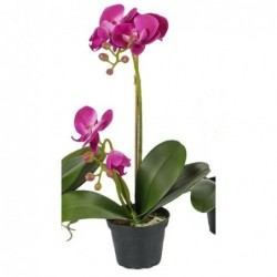 Orchidée phalaenopsis - Mr plant - Fuchsia - 45 cm